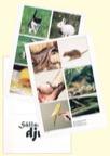 Min egen bok - Sällskapsdjur 5-pack